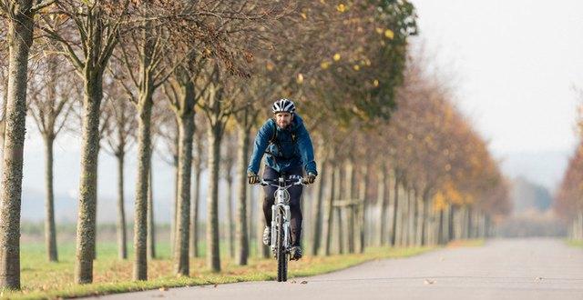 Man som cyklar genom en allé.
