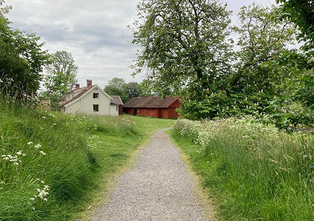 Mårtagården syns i slutet av en grusväg omgiven av lummiga träd och grönska.